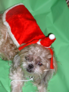 Pet Fancy Dress Costume - Pet Santa Claus Christmas Outfit