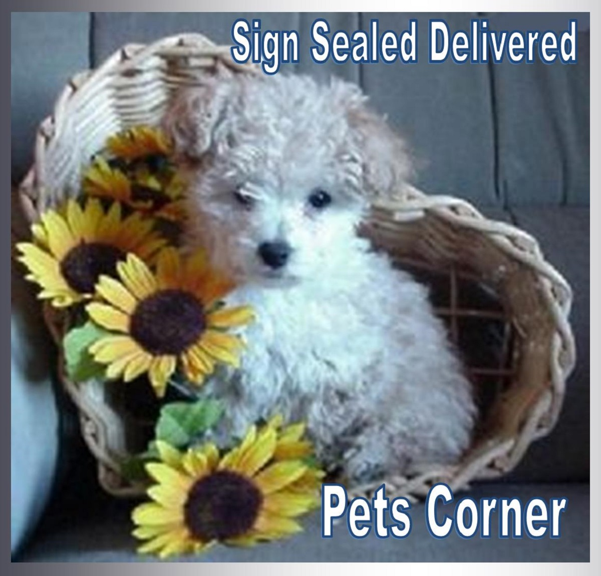 Sign Sealed Delivered Pets Corner